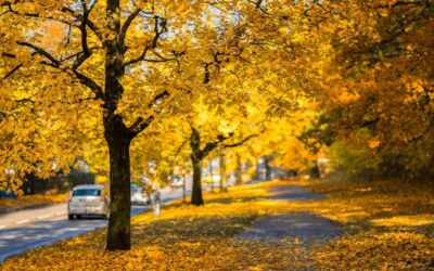 Fall Car Care Month is Right Around the Corner!